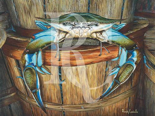 """""""Crab Bucket"""""""