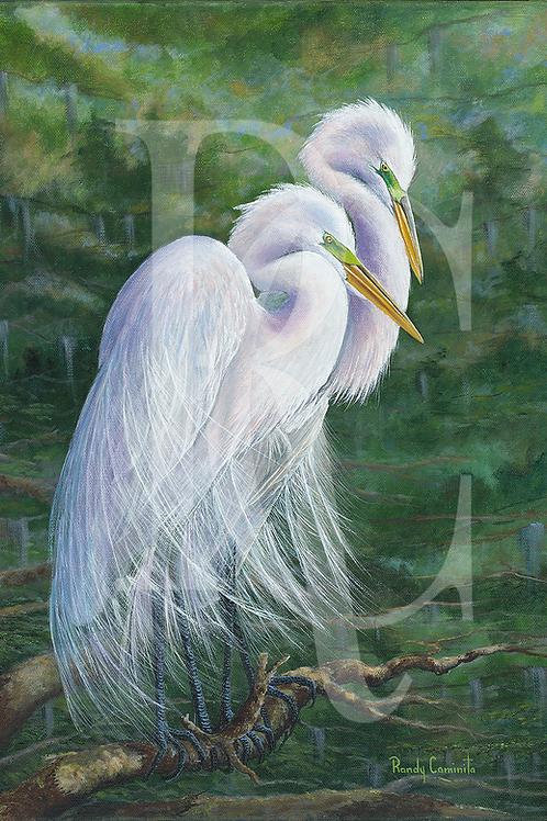 """Great White Egret Couple"""