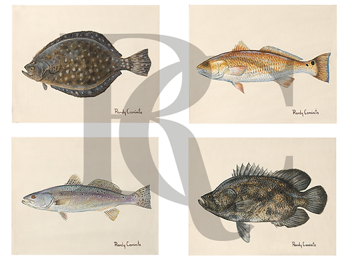 Fish Study Set - Flounder, Red, Spec Trout & Triple Tail