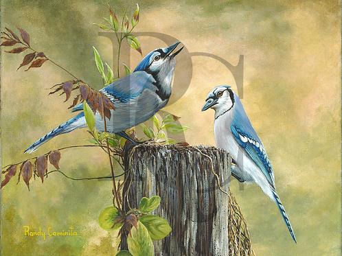 """Blue Jays"""
