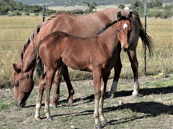 Lot 14 Boon Baby filly.jpg