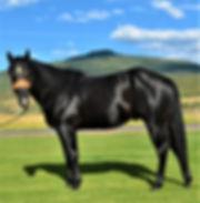 Black Jack 1.jpg