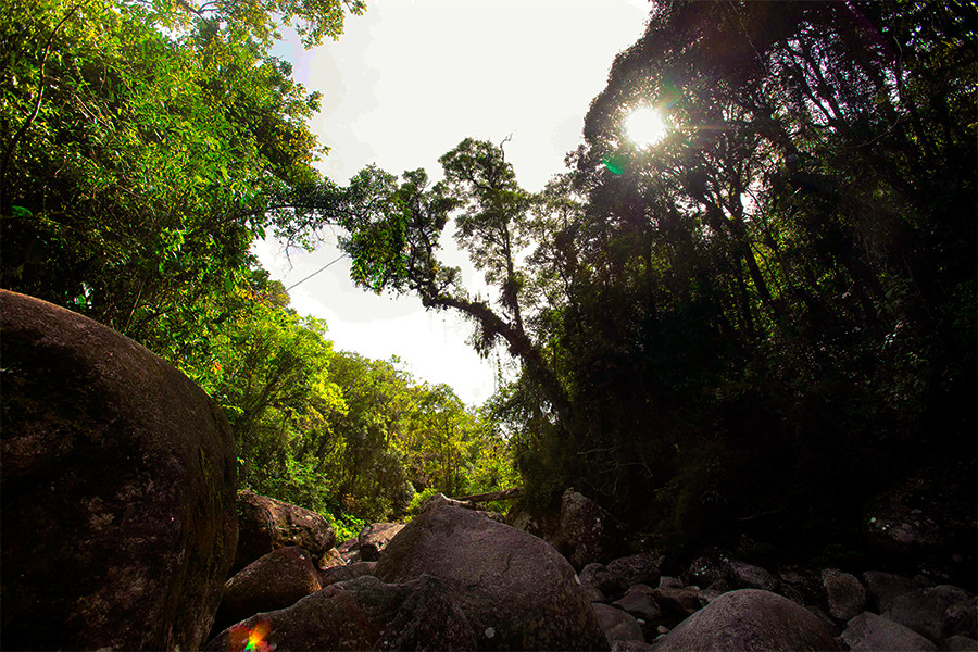 Poço do Marimbondo em meio a Floresta