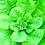 Thumbnail: Grow Super Foods Anywhere (Online)