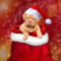 christmas-3001318_1920.jpg