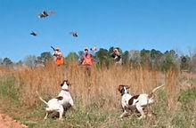 quail hunt Roans Branch quailhuntnc.com
