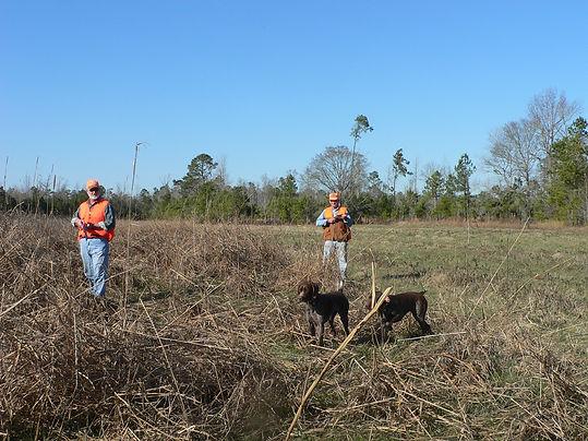 quail hunt Roans Branch birdhuntnc.com
