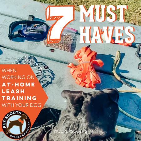7 Must Haves When Working On At-Home Leash Training With Your Dog