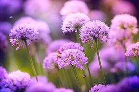 Purple Flowers, 4 Sessions mentorship