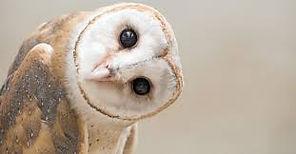 owl 1.jpg