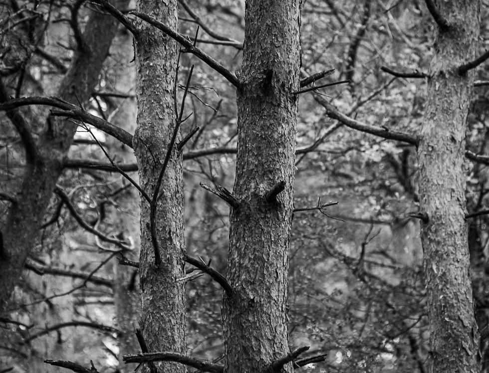 """Fine - Art Print """"Wald"""""""