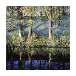 Bluebell_Reflection,60cm_x_60cm,£185.jpg