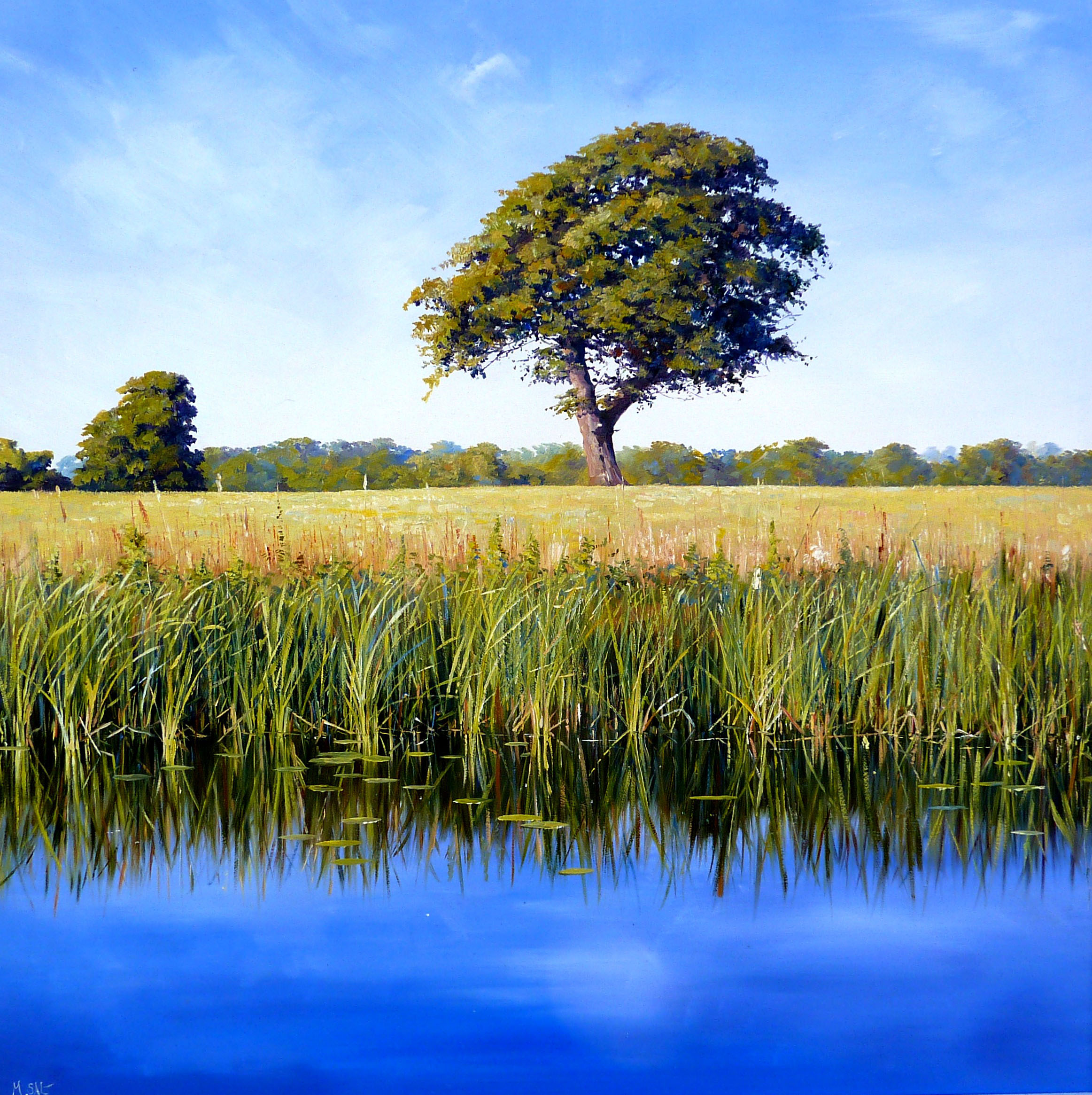 Summer Stillness,oil, 60cm x 60cm.