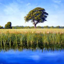 Summer Stillness,oil, 60cm x 60cm.