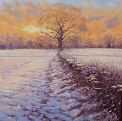 Evening Light on Snow,oil,76cm x 76cm.JP