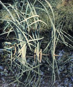 Reeds,50cm_x_60cm_£175.jpg