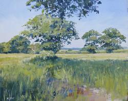 Summer s Morn,oil,30cm x 25cm.JPG