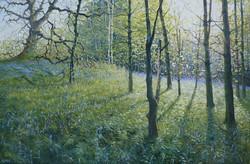 Bluebell Wood,oil,70cm x 40cm.