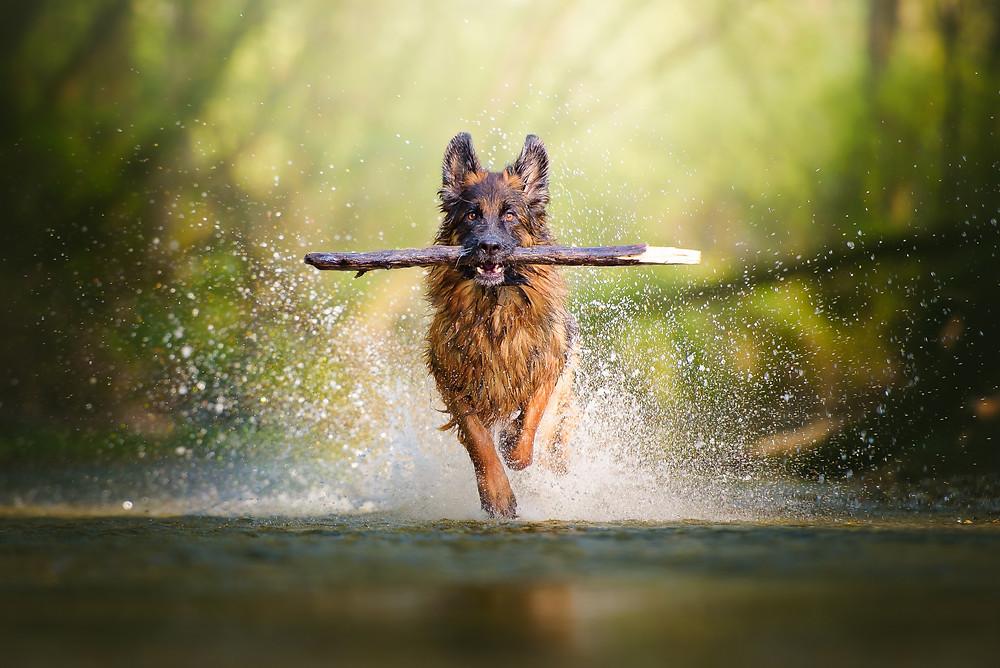 Green Canine pitää koirasi vauhdissa