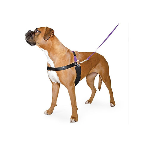 Ancol Happy heel harness and lead