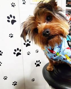 Wad up Buster 😎😎 #yorkie #dogsofdublin #dogsofdublin #doggrooming #petshop