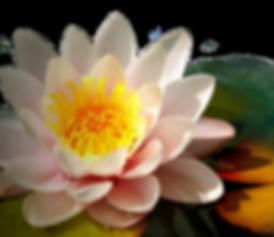 BUDDHA-EAR4.png