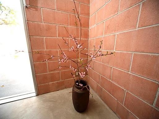 ヘッドスパ室の桜