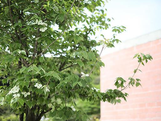 一年で最も新緑の美しい季節