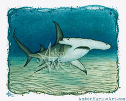 Great Hammerhead Shark ~ 2016 ©
