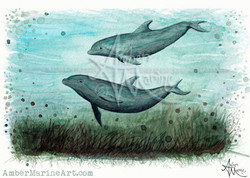 Two Inshore Dolphins ~ 2015 ©