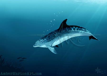 Blackfin the Dolphin ~ 2014 ©