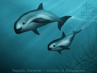 Artivism ~ My Vaquita Art & the Message