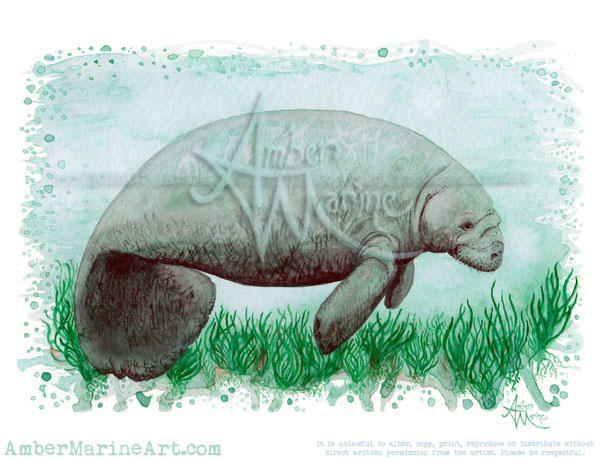 """The Manatee"" Watercolor Painting"