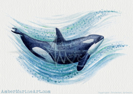 """Orca Splash"" Watercolor by Amber Marine, © 2016, all rights reserved"