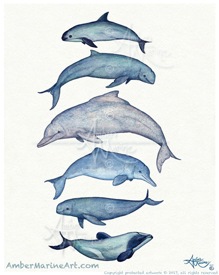 Rare Cetaceans by Amber Marine