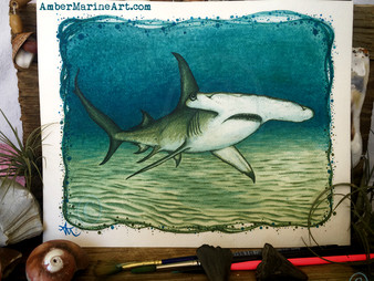 June - Great Hammerhead Shark!