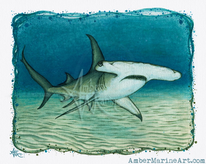 Great Hammerhead Shark Watercolor