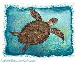 Hawksbill Sea Turtle Art Print