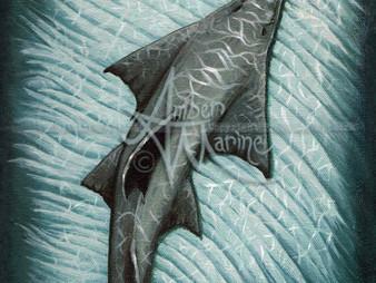 Sawfish September!
