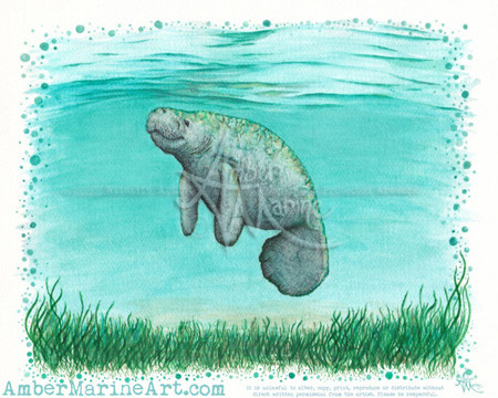 """""""Mossy Manatee"""" watercolor and ink art by wildlife artist Amber Marine"""