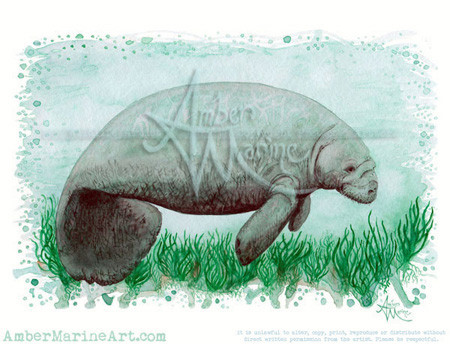 Manatee watercolor painting by wildlife artist Amber Marine