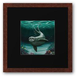 Hawaiian Monk Seal Framed Print
