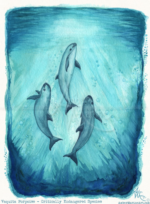 """Song of the Vaquita"" Watercolor"