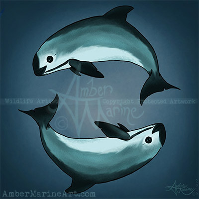 Spiraling Vaquita Art by Amber Marine, the critically endangered vaquita porpoise spirals into the
