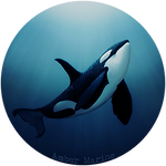 """The Dreamer"" Orca Art by Amber Marine ~ Amber's social media avatar & link to Amber Marine on Instagram"
