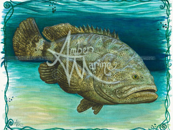 January - Goliath Grouper!