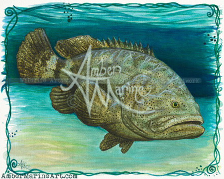 Goliath grouper watercolor painting by wildlife artist Amber Marine