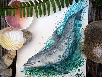 "New Art: ""Ozzy"" the Indian River Lagoon Bottlenose Dolphin!"