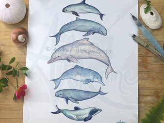 "New Art: ""Rare Cetaceans"""