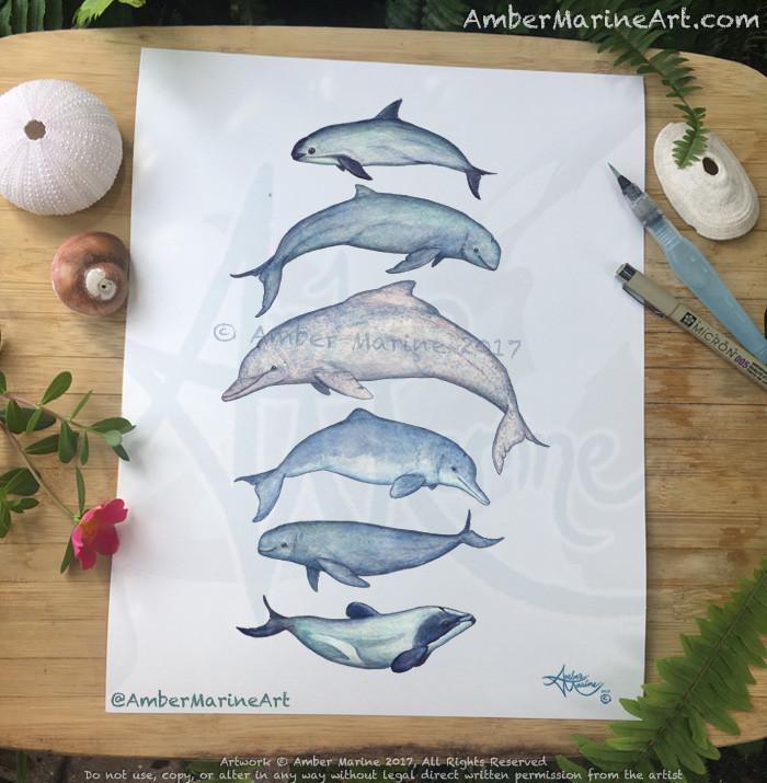 Rare Cetaceans, Vaquita, irrawaddy, humpback, baiji, maui, finless, dolphin, porpoise, watercolor art, painting by artist Amber Marine